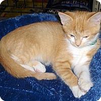 Adopt A Pet :: Ruthie - Richmond, VA