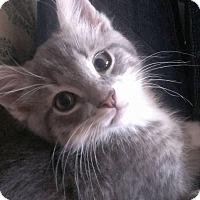 Adopt A Pet :: Smitty - Port Republic, MD