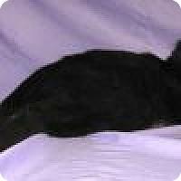 Adopt A Pet :: Sullivan - Powell, OH