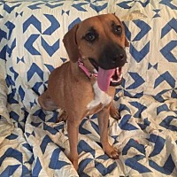 Adopt A Pet :: Karly - Cherry Valley, CA