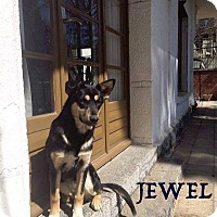 Adopt A Pet :: Jewel *Adoption Pending* - Guelph, ON