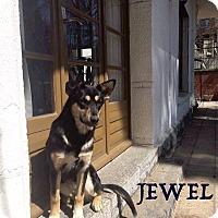 Adopt A Pet :: Jewel - Guelph, ON