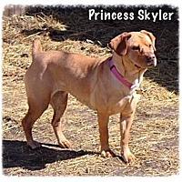 Adopt A Pet :: Skyler - Chillicothe, OH