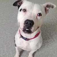 Adopt A Pet :: Emily - Pompton Lakes, NJ