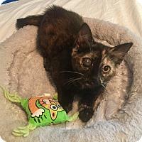 Adopt A Pet :: Misty - Mount Pleasant, SC