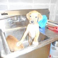 Adopt A Pet :: Donald - Opelousas, LA