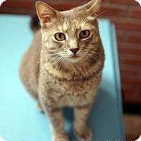 Adopt A Pet :: Beatriz - Tucson, AZ