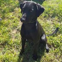 Adopt A Pet :: Shadow - Livingston, TX