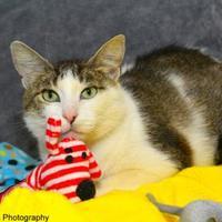 Adopt A Pet :: Nissa - Neenah, WI