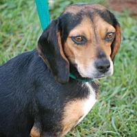 Adopt A Pet :: Anna - Winder, GA