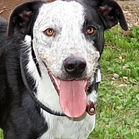 Adopt A Pet :: Opie - Union, CT