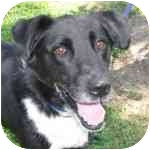 Border Collie Mix Dog for adoption in Eatontown, New Jersey - Beemer
