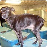 Adopt A Pet :: Bennie - Irvington, KY
