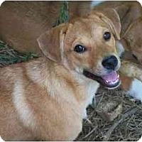 Adopt A Pet :: Elle - Albany, NY