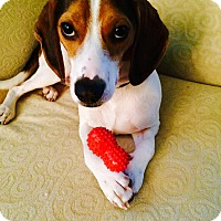 Adopt A Pet :: Lucky - Toledo, OH