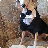 Adopt A Pet :: Riley in San Angelo Area - Argyle, TX