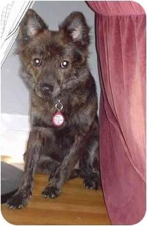 Border Collie Mix Dog for adoption in Lomita, California - May