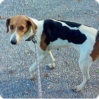 Adopt A Pet :: Bea - RESCUED! - Zanesville, OH