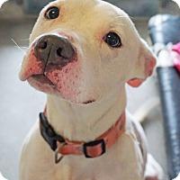 Adopt A Pet :: KAYA - Dana Point, CA