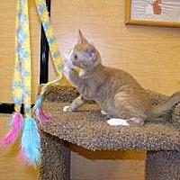 Adopt A Pet :: Romero - Miami, FL