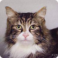 Adopt A Pet :: Baldwin - Shoreline, WA