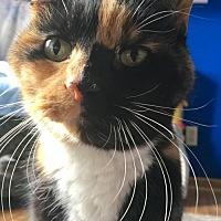 Adopt A Pet :: Mixie - Blaine, MN