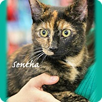 Adopt A Pet :: Senta - Waterbury, CT