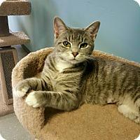 "Adopt A Pet :: ""  Jenna  "" - Scottsburg, IN"