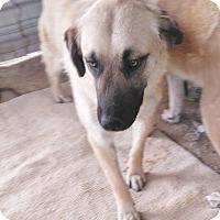 Adopt A Pet :: Cinnamon - Erin, ON