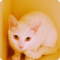 Adopt A Pet :: Marlena - Toccoa, GA