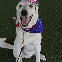 Adopt A Pet :: Jake - Odessa, FL