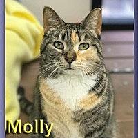 Adopt A Pet :: Molly - Aldie, VA