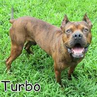 Adopt A Pet :: Turbo - Georgetown, SC