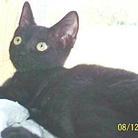 Adopt A Pet :: Booker - Mexia, TX