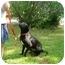 Photo 2 - Boxer/Labrador Retriever Mix Dog for adoption in Kingwood, Texas - Jewel