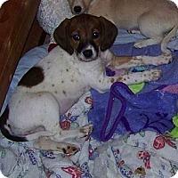 Adopt A Pet :: Kellie - Lancaster, OH