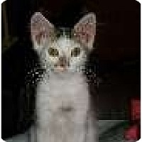 Adopt A Pet :: Napoleon - Modesto, CA