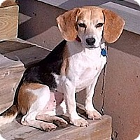 Adopt A Pet :: Lucy - Hamilton, ON