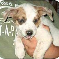 Adopt A Pet :: Ema - Phoenix, AZ