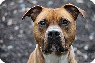 Terrier (Unknown Type, Medium) Mix Dog for adoption in Brookhaven, New York - Caramel