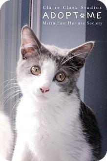 Domestic Shorthair Kitten for adoption in Edwardsville, Illinois - Dobby
