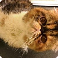 Adopt A Pet :: Sidney - Beverly Hills, CA