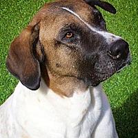 Adopt A Pet :: Lenny - Miami, FL