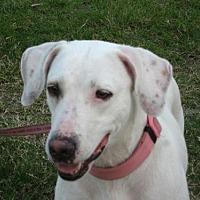 Adopt A Pet :: Hope - Royal Palm Beach, FL