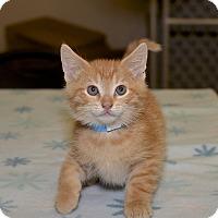 Adopt A Pet :: Mario - Medina, OH