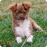 Adopt A Pet :: Ozzy - San Diego, CA