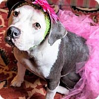 Adopt A Pet :: LULA - Waterbury, CT