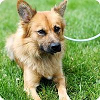 Adopt A Pet :: Fabio - Appleton, WI