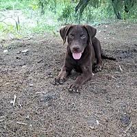 Adopt A Pet :: Jobe - Jay, NY