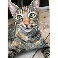 Adopt A Pet :: JINX - Diamond Bar, CA